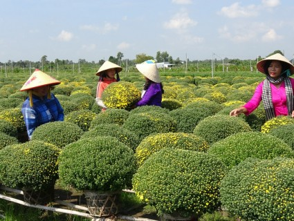 Sa Dec flower village is brightly approaching Tet